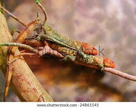 Twin Lizards - stock photo