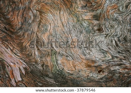 twisted pine wood close up