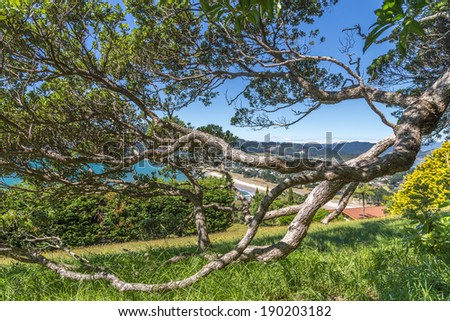 Twisted tree branches touch the grass - stock photo