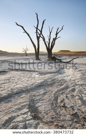 Twisted trees in Deadvlei, Namibia - stock photo