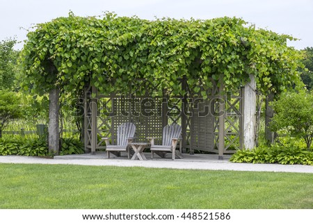 Two Adirondack Chairs Under a Grape Trellis in a Vineyard