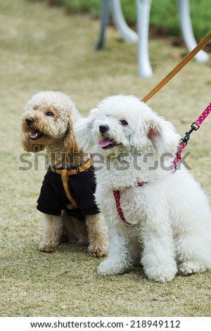 Two adorable dogs sitting in lawn side by side - stock photo