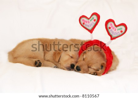 two adorable golden retriever puppies sleeping; one with headband with heart antennae - stock photo