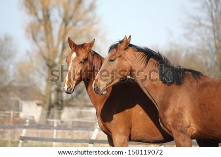 Two adorable horses nuzzling each other with affection - stock photo