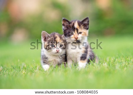 two adorable kittens in the grass