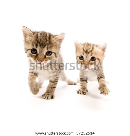 Two adorable kittens isolated on white background - stock photo