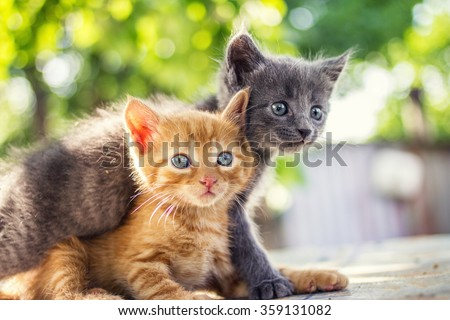Two adorable kittens playing together.Kittens outdoor. - stock photo
