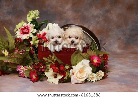 Two adorable little puppies in hatbox with flowers - stock photo