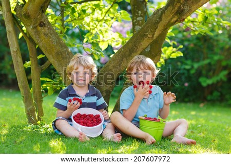 Two adorable little sibling boys eating raspberries in home's garden, outdoors.