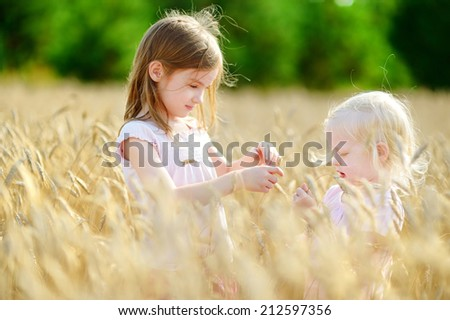 Two adorable little sisters walking happily in wheat field on warm and sunny summer day - stock photo
