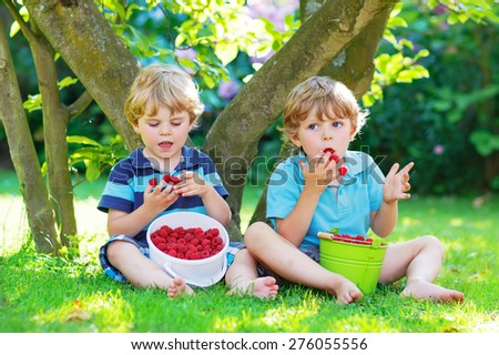 Two adorable little twin boys eating fresh organic raspberries from home's garden, outdoors. Healthy food and snack for kids in summer.