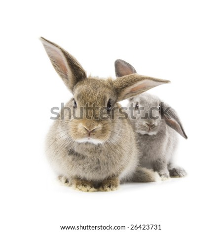Two adorable rabbits isolated on a white background - stock photo