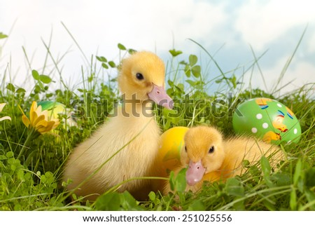 Two adorable yellow easter ducklings in grass with colorful easter eggs - stock photo