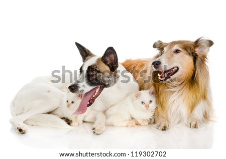 two adult dogs and tiny kittens. isolated on white background