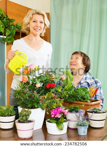Two aged women taking care of domestic plants in pots