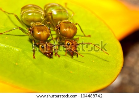 two ant on a leaf. - stock photo