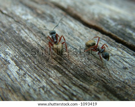 Two ants on log - stock photo