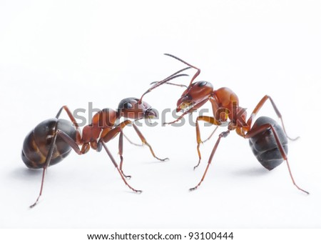 two ants playing - stock photo
