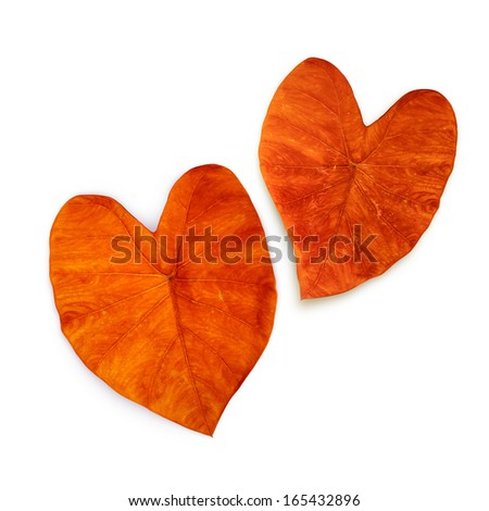 two autumn leaves in the shape of hearts - stock photo