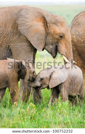 Two baby elephants playing in the grass, Masai Mara, Kenya - stock photo