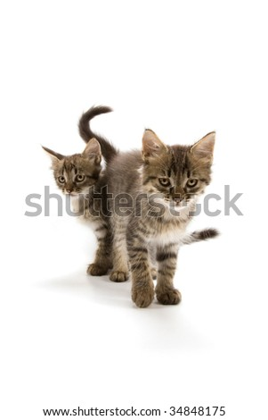 Two 'bad looking' kittens isolated on white