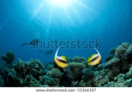 two banner-fish and two scuba divers - stock photo