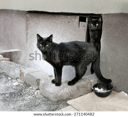 Two beautiful black cat photographed close up - stock photo