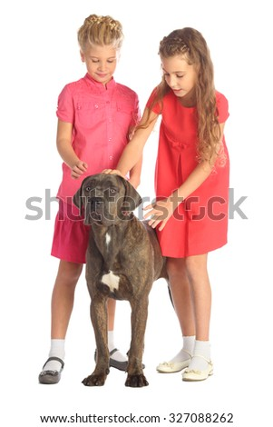 Two beautiful girls stroking a big dogs head isolated on white. Focus on the dog - stock photo