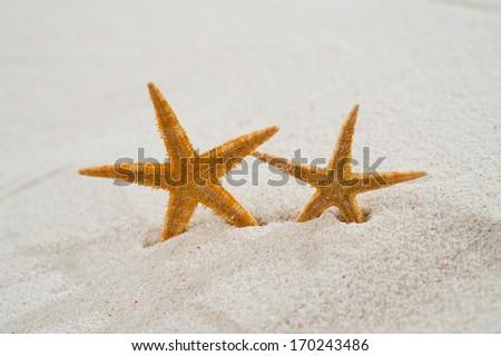 Two beautiful starfish on bright sand. - stock photo