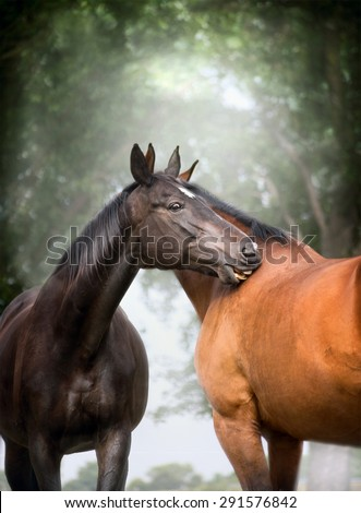 Two  beautiful warm-blood dressage horses scratching each over big tree nature background - stock photo