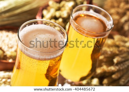 two beer glasses with hops, wheat, grain, barley and malt - stock photo