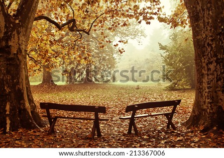 Two benches in a colorful Autumn wood - stock photo
