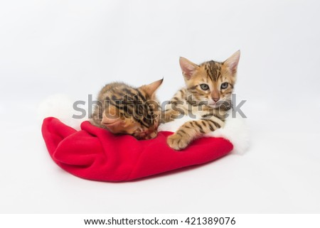 Two Bengal kitten on the hat of Santa Claus - stock photo
