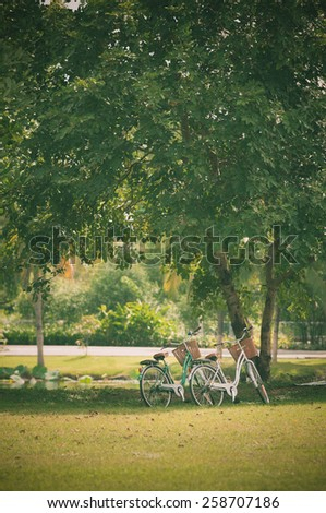 Two bicycle in fresh summer park - stock photo