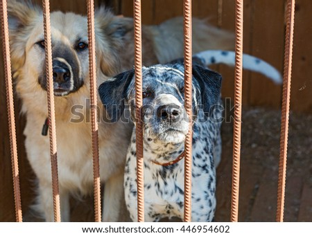 Two big dogs in a cage of a shelter - stock photo