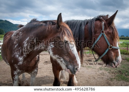 Two big horses at the farm, heads turned to the side