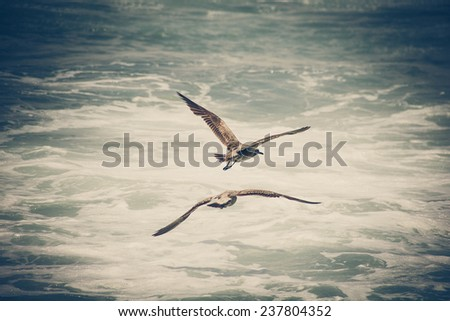 Two birds flying over sea waves - abstract - stock photo