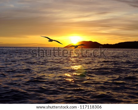 Two birds in flying over the sea at sunset