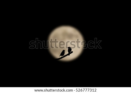 Two birds in the moonlight silhouette