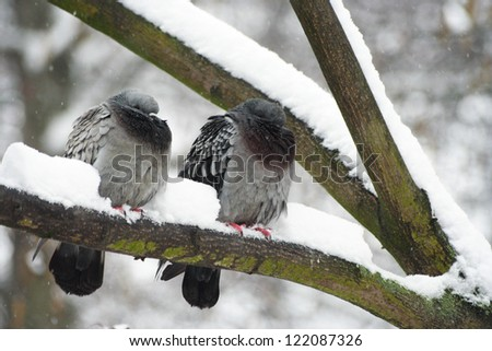 Two birds in winter - stock photo