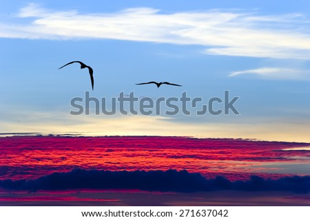 Two birds soar above the clouds against a blue sky and red and white clouds. - stock photo