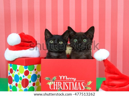 Two black kittens siblings brother sister popping out of a red holiday box,  miniature santa hats on green table, red striped background.  Merry Christmas on box, multi colored polka dot box on floor