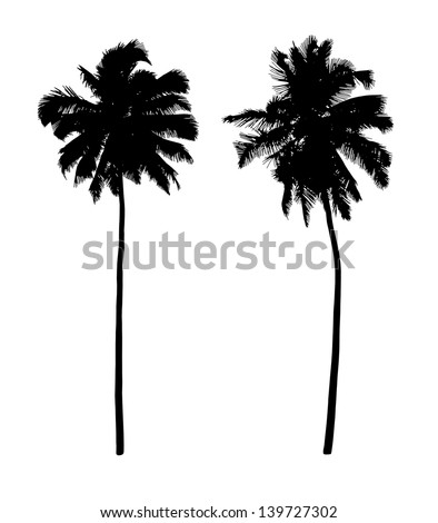 two black silhouettes of beautiful coconut trees - stock photo