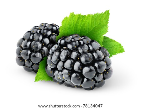 Two blackberries isolated on white - stock photo