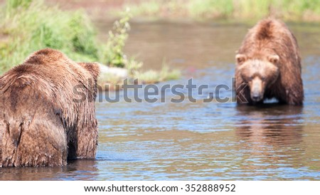 Two brown bear appear to be in a showdown for a good fishing spot - stock photo