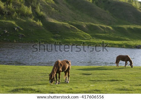 Two brown horses are grazing near river. Green grass are in back- and foreground. - stock photo