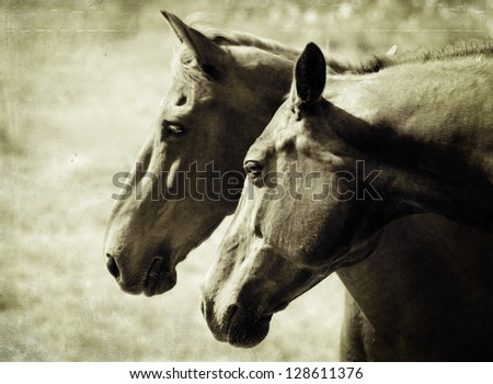 Two brown horses in love - stock photo