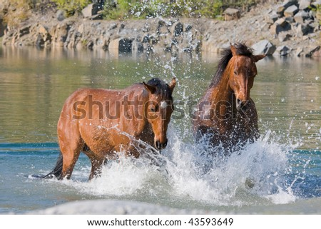 Two brown horses in the water - stock photo