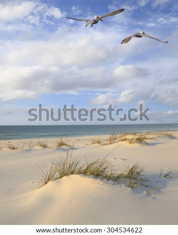Two Brown Pelicans Fly Over a White Sand Florida Beach - stock photo
