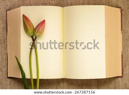Two bud tulips on open book - stock photo